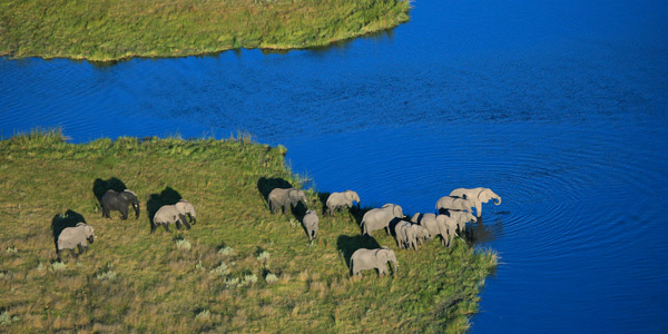 Elephants at Savute, Botswana